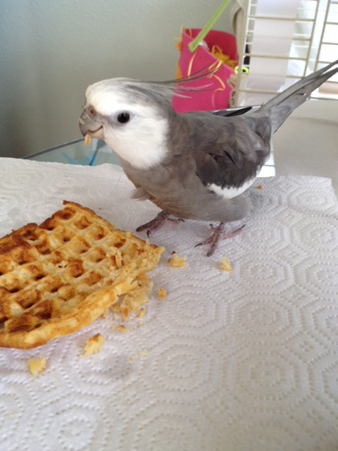 "Let's call this one ""Bird With Waffle."""