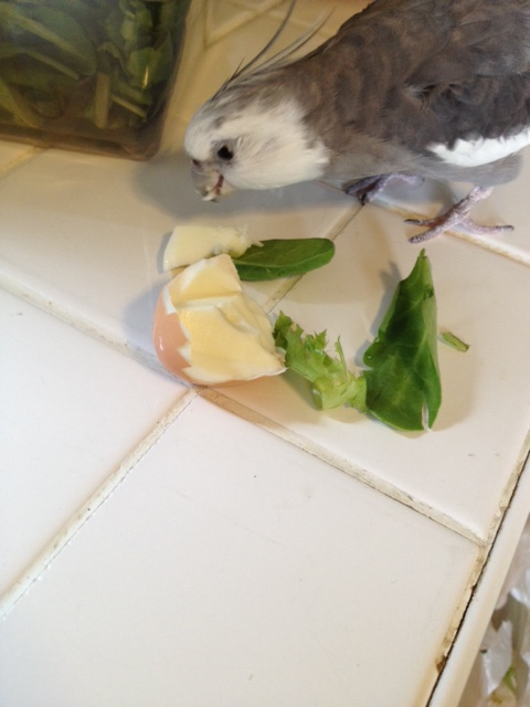 "What a perfect ""extraction disguise"" - egg on a bed of greens. No one will even know you're gone!"