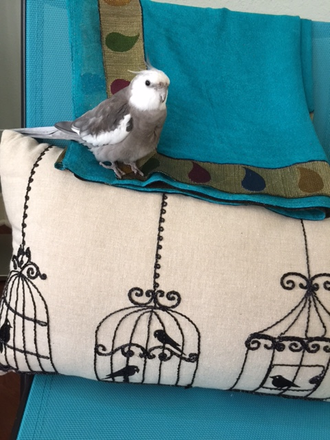 """Today we will talk about how wonderful life is when you are an """"out of cage"""" feathered being."""