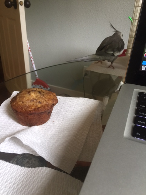 As quickly as he came, the Invisible Muffin Eater vanishes back into the dim evening light.