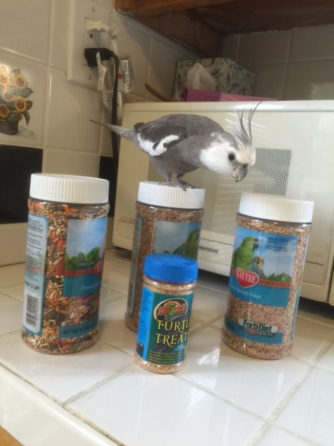 """Perhaps giving my large featherless assistant the """"stink eye"""" will be enough to help her spot the problem."""