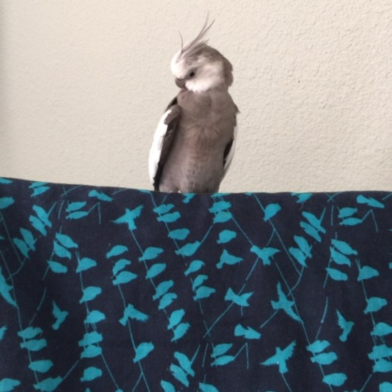 """""""Operation Preen"""" has commenced."""