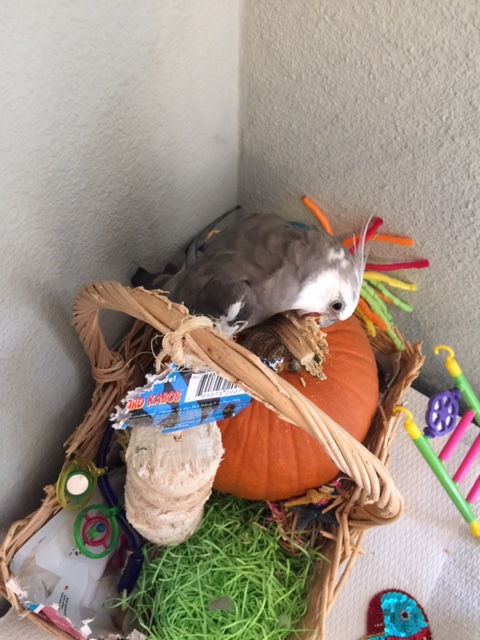 """In the press release, be sure to emphasize the phrase """"death defying,"""" Mom - we can call it """"Extreme Pumpkin Art!"""""""