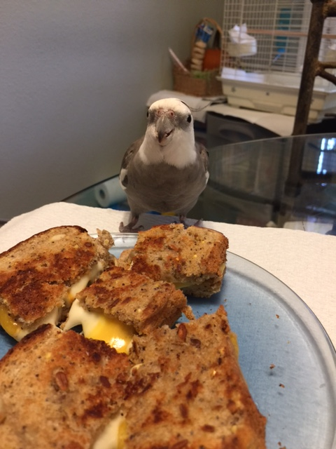 Yes, Mom? Yes, I see it is a grilled cheese. Yes of course I'm interested. No, you don't need to come any closer.