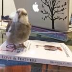 PearlonBookCover