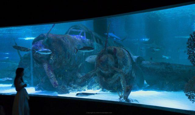 Antalya-Aquarium-47