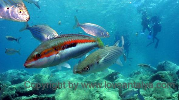 Ubåd Antalya