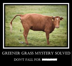 Greener Grass Mystery Solved