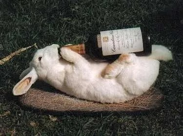 Easter drinking