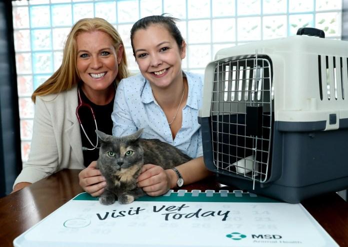 MSD Animal Health Cat Lovers