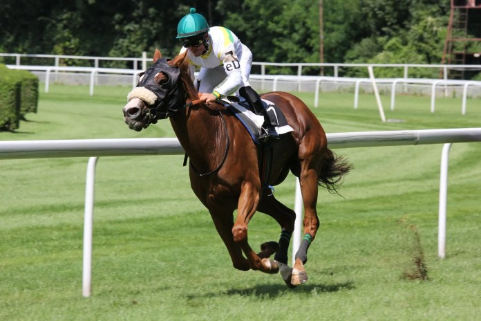 Horseracing is in the blood both sides of the border)