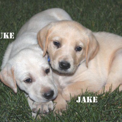 Welcome our two newest additions Luke and Jake
