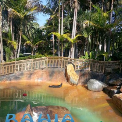 Bahia Resort Hotel Review {Perfect Place for Families}