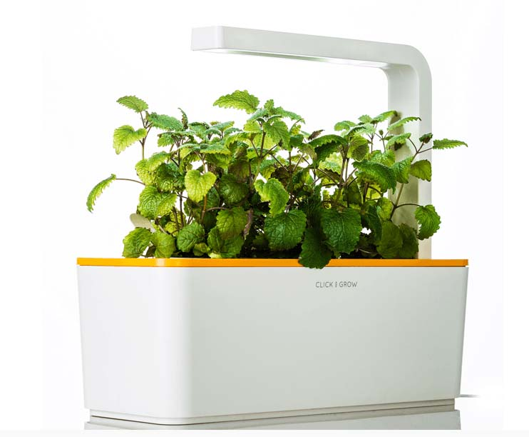 Making Herb Gardens at Home
