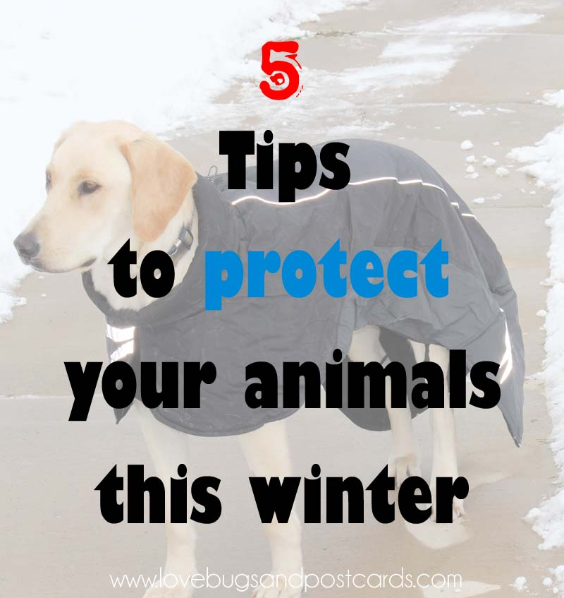 5 tips to protect your animals this winter