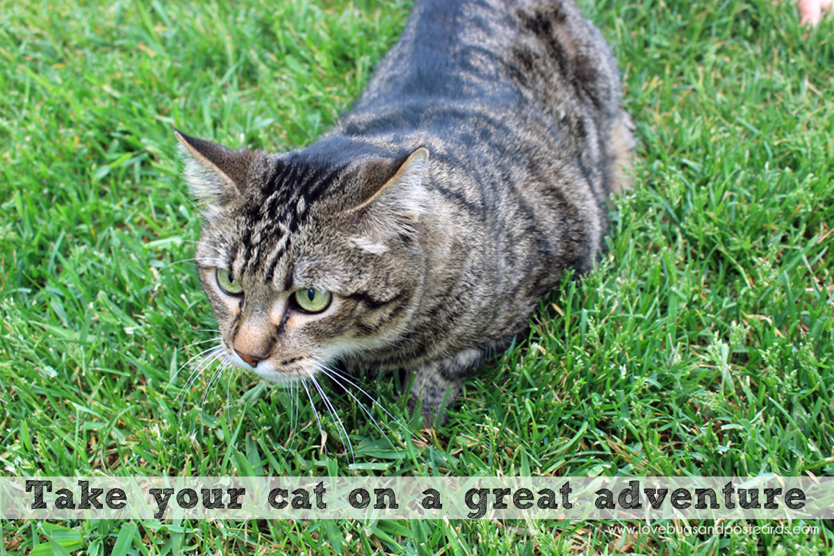 Take your cat on a great adventure