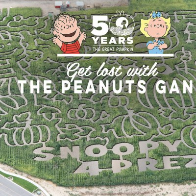 Visit a local corn maze to celebrate the 50th anniversary of It's the Great Pumpkin Charlie Brown