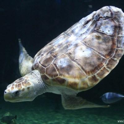 Visiting the Loveland Living Planet Aquarium in Utah #HauntedAquarium