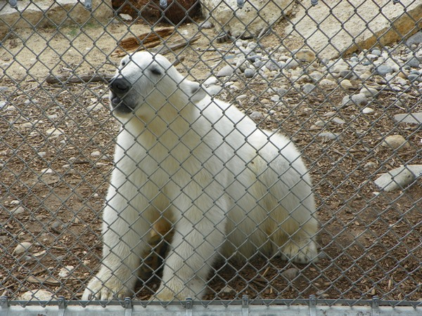 Winnipeg Zoo (13)