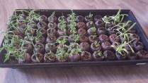 seeds (5)