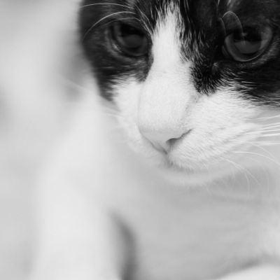 綺麗な猫のアリス