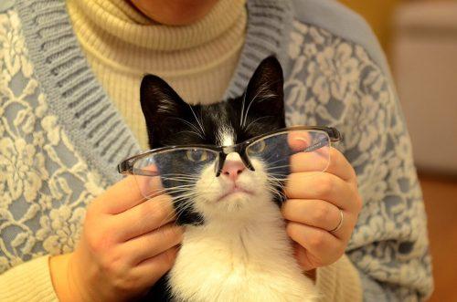 眼鏡をかけた猫のカイト