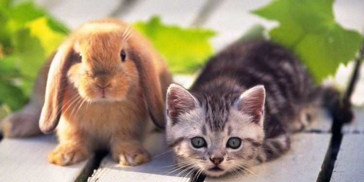 Do cats and rabbits get along? | LoveCATS World