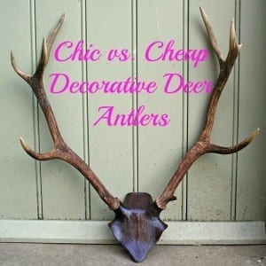 Chic vs. Cheap: Deer Antler Heads