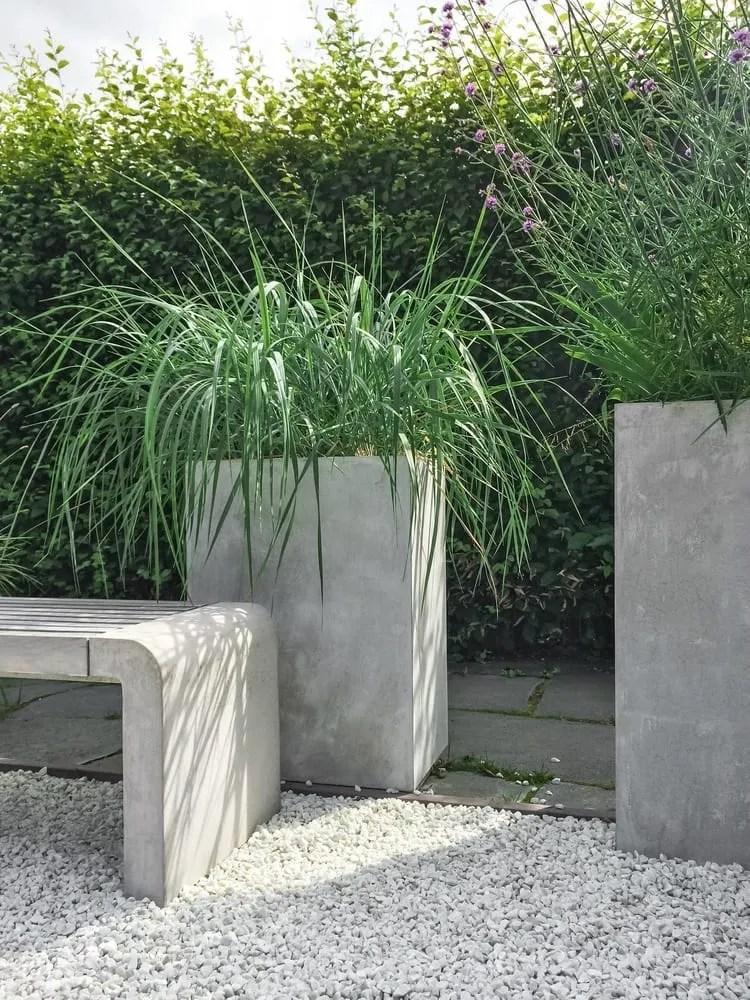 Contemporary plants