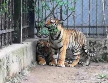 1 zoo 1