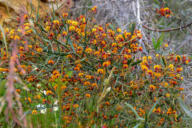 A shrub full of colourful wildflowers