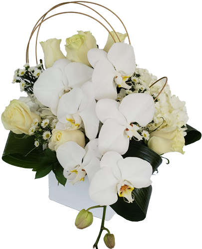 White-Paradise Love Flowers
