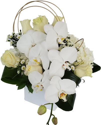 White-Paradise Love Flowers