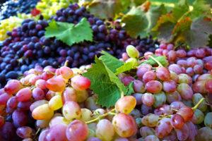 grape-990068_960_720