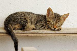 kitten-1137674_960_720