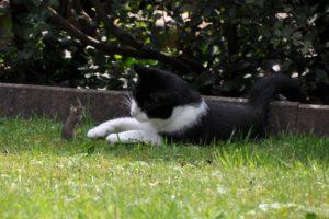 cat-396535_960_720