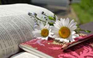 daisies-676368_960_720