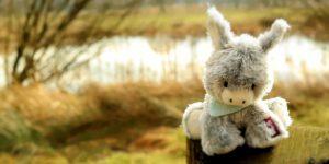 donkey-1234193_960_720