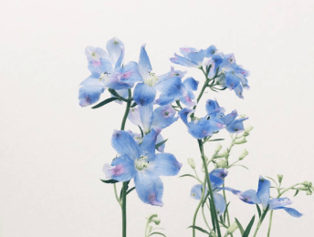 「青い花画像」の画像検索結果
