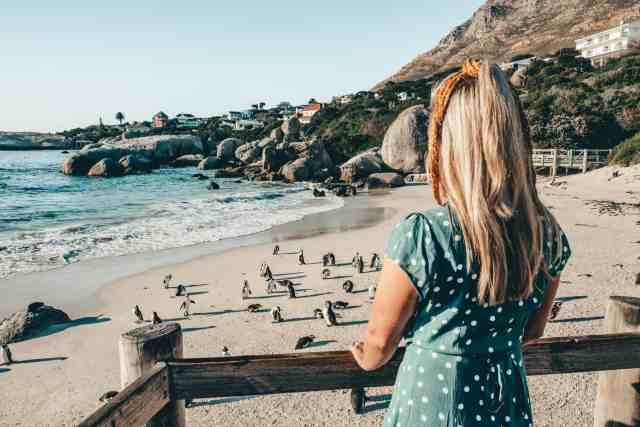 Viewing the penguins at Boulders Beach, one of the top things to do in Cape Town