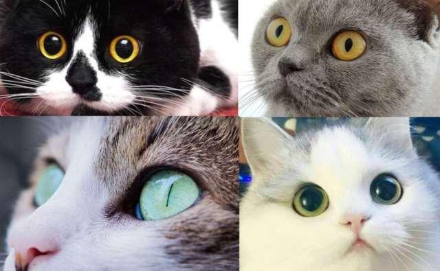 Ochii pisicilor