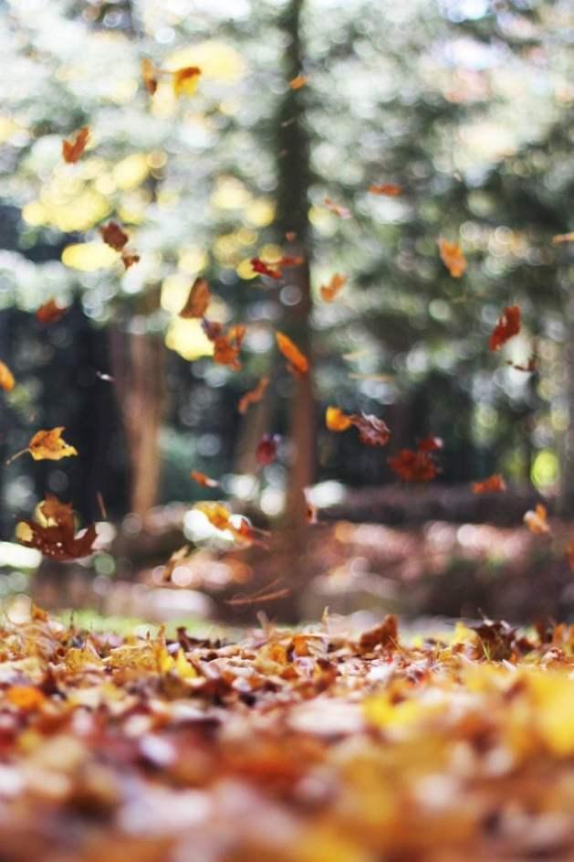 Photo Credit - Autumn Mott