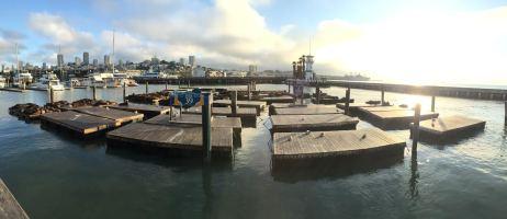 SF Pier 39 2