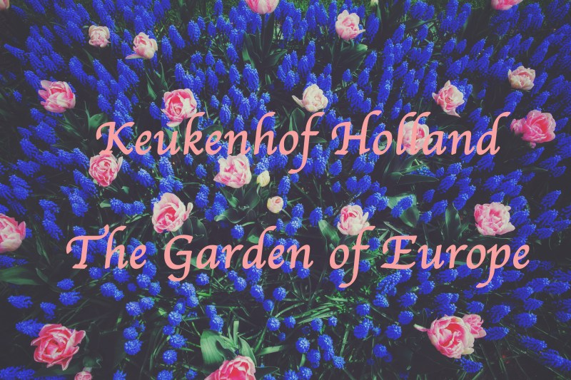 Keukenhof – The Garden of Europe