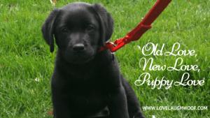 Old Love, New Love, Puppy Love
