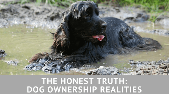 THE HONEST TRUTH: DOG OWNERSHIP REALITIES