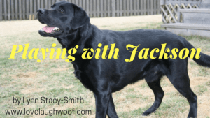Playing with Jackson Love Laugh Woof blog