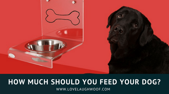 How Much To Feed Your Dog