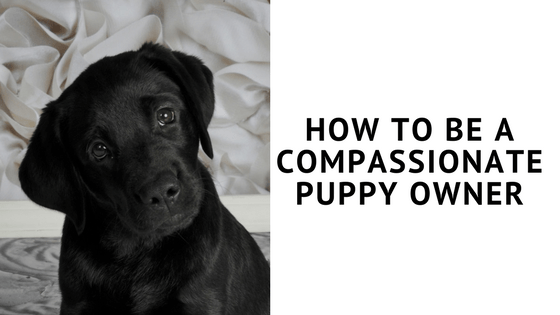 how to be a compassionate puppy owner
