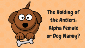The Holding of the Antlers- Alpha Female or Dog Nanny-